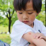 コロナウイルスは蚊で感染するか!?分析と蚊を寄せない徹底防護アイテム